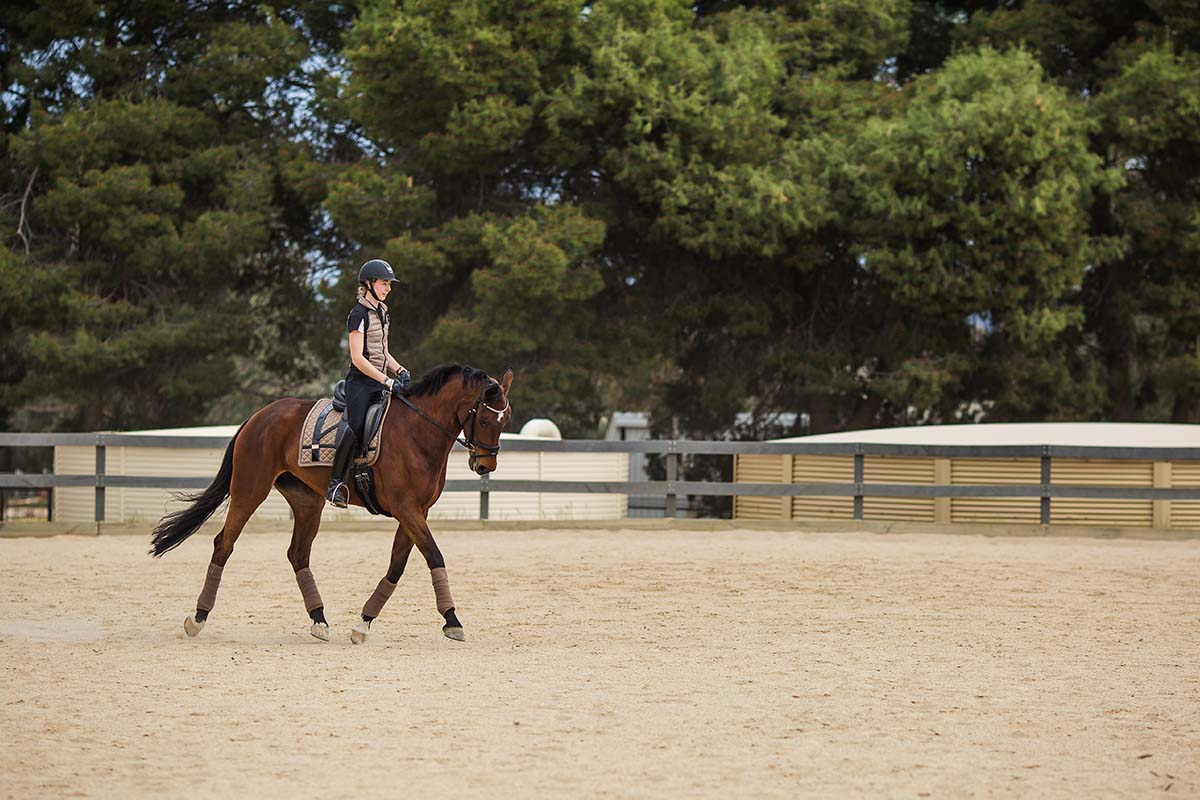 Our recently upgraded Equine Centre is an outstanding facility for horse-loving students.