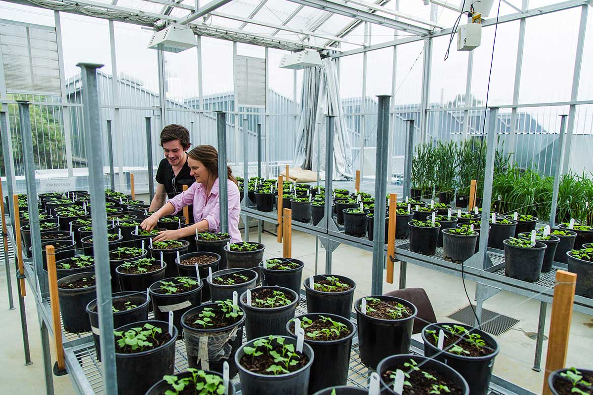 Get hands-on in our on-campus glasshouse, with specialist mechanical, lighting and humidity systems.